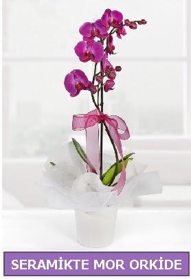 Seramik içerisinde birinci kalite tek dallı mor orkide  Mersin uluslararası çiçek gönderme