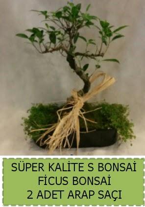 Ficus S Bonsai ve arap saçı  Mersin çiçek online çiçek siparişi