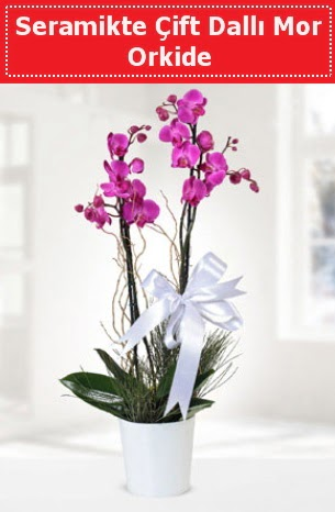 Seramikte Çift Dallı Mor Orkide  Mersin hediye çiçek yolla