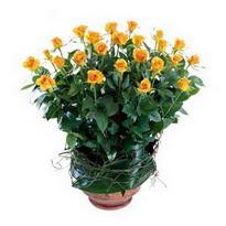 Mersin çiçek satışı  10 adet sari gül tanzim cam yada mika vazoda çiçek
