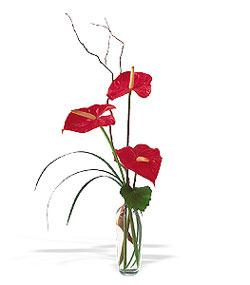 Mersin online çiçekçi , çiçek siparişi  cam yada mika Vazoda 3 adet  antoryum