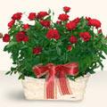 Mersin uluslararası çiçek gönderme  11 adet kirmizi gül sepette