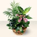 Mersin çiçek servisi , çiçekçi adresleri  5 adet canli çiçek sepette