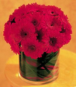 Mersin kaliteli taze ve ucuz çiçekler  23 adet gerbera çiçegi sade ve sik cam içerisinde