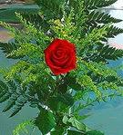 1 adet kirmizi gül buketi   Mersin çiçek yolla