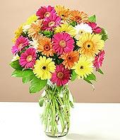 Mersin çiçek siparişi sitesi  17 adet karisik gerbera