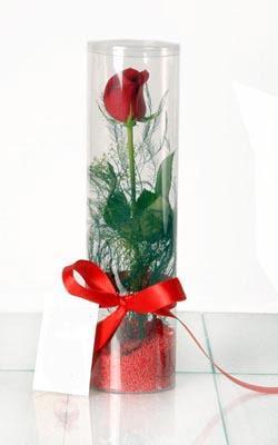 Mersin anneler günü çiçek yolla  Silindir vazoda tek kirmizi gül