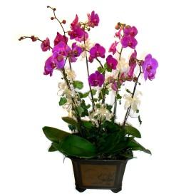 Mersin çiçekçi telefonları  4 adet orkide çiçegi