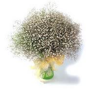 Mersin çiçekçiler  cam yada mika vazo içerisinde cipsofilya demeti
