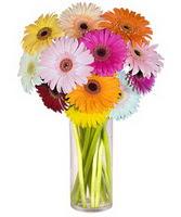 Mersin çiçek gönderme sitemiz güvenlidir  Farkli renklerde 15 adet gerbera çiçegi