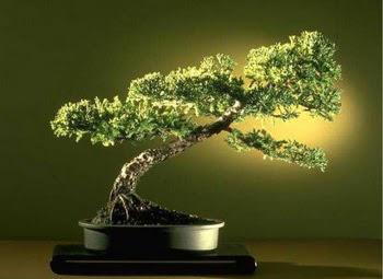ithal bonsai saksi çiçegi  Mersin yurtiçi ve yurtdışı çiçek siparişi
