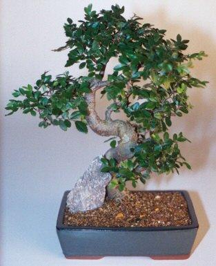 Mersin 14 şubat sevgililer günü çiçek  ithal bonsai saksi çiçegi  Mersin online çiçekçi , çiçek siparişi