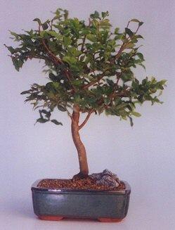 Mersin kaliteli taze ve ucuz çiçekler  ithal bonsai saksi çiçegi  Mersin hediye çiçek yolla