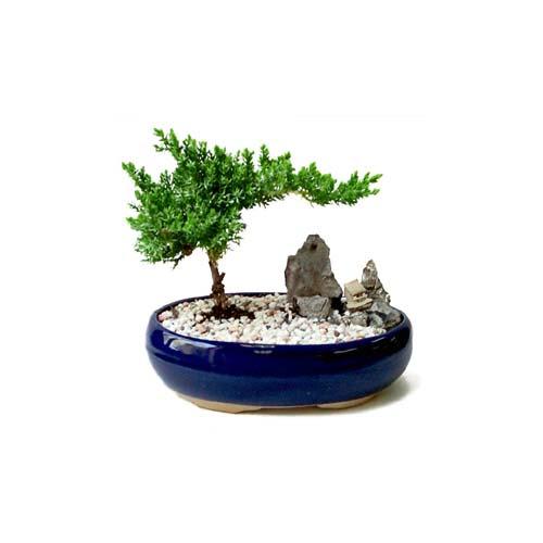 ithal bonsai saksi çiçegi  Mersin hediye sevgilime hediye çiçek