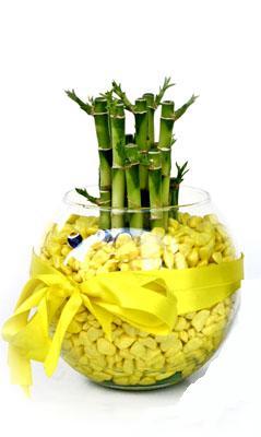 cam fanus içerisinde bambo  Mersin çiçek yolla , çiçek gönder , çiçekçi