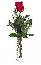 Vazo içerisinde 1 adet kirmizi gül  Mersin çiçek satışı