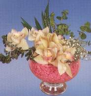 Mersin çiçekçiler  Dal orkide kalite bir hediye