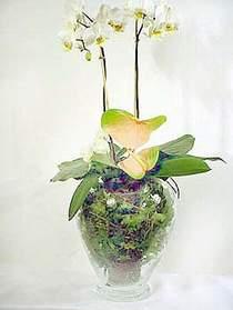 Mersin çiçek servisi , çiçekçi adresleri  Cam yada mika vazoda özel orkideler