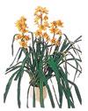 Mersin İnternetten çiçek siparişi  Orchiede ithal büyük boy saksi