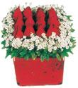 Mersin hediye sevgilime hediye çiçek  Kare cam yada mika içinde kirmizi güller - anneler günü seçimi özel çiçek