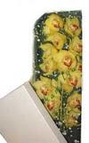 Mersin hediye sevgilime hediye çiçek  Kutu içerisine dal cymbidium orkide