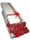 Mersin çiçek online çiçek siparişi  11 adet 1.kalite magnum güller