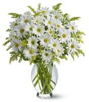 Vazo içerisinde beyaz krizantem çiçekleri  Mersin yurtiçi ve yurtdışı çiçek siparişi