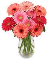 vazo içerisinde 13 adet gerbera çiçeği  Mersin online çiçekçi , çiçek siparişi
