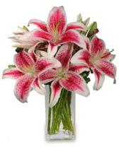 Vazo içerisinde 5 dal kazablanka çiçeği  Mersin çiçek satışı