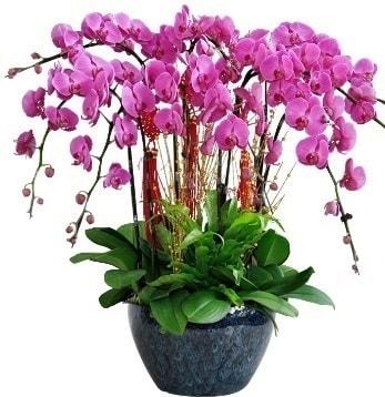 9 dallı mor orkide  Mersin ucuz çiçek gönder