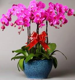 7 dallı mor orkide  Mersin çiçek siparişi sitesi