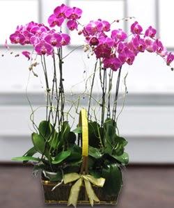 4 dallı mor orkide  Mersin çiçek siparişi vermek