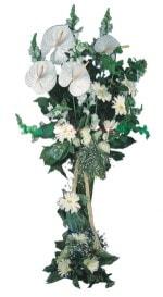 Mersin çiçekçiler  antoryumlarin büyüsü özel