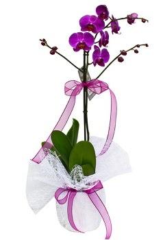 Tek dallı mor orkide  Mersin çiçek online çiçek siparişi