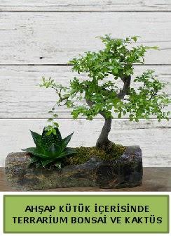 Ahşap kütük bonsai kaktüs teraryum  Mersin çiçek gönderme sitemiz güvenlidir