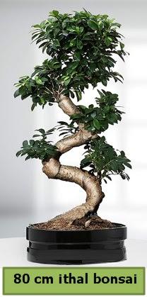 80 cm özel saksıda bonsai bitkisi  Mersin çiçek online çiçek siparişi