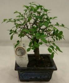 Minyatür ithal japon ağacı bonsai bitkisi  Mersin çiçek servisi , çiçekçi adresleri