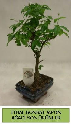 İthal bonsai japon ağacı bitkisi  Mersin çiçekçi mağazası