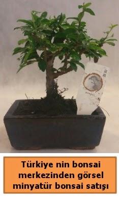 Japon ağacı bonsai satışı ithal görsel  Mersin anneler günü çiçek yolla