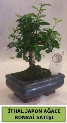 İthal japon ağacı bonsai bitkisi satışı  Mersin çiçek online çiçek siparişi