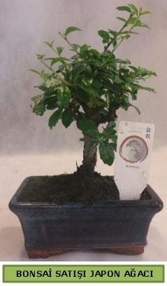 Minyatür bonsai ağacı satışı  Mersin hediye sevgilime hediye çiçek