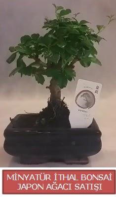Küçük görsel bonsai japon ağacı bitkisi  Mersin çiçek mağazası , çiçekçi adresleri