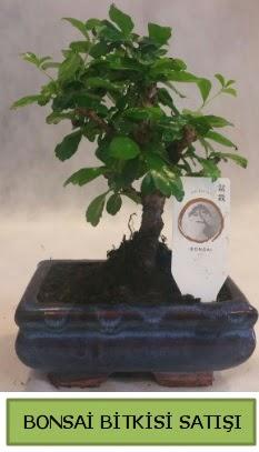 Bonsai ithal görsel minyatür japon ağacı  Mersin kaliteli taze ve ucuz çiçekler