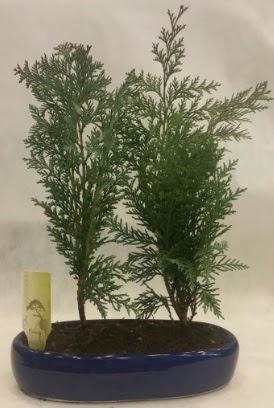 SINIRLI SAYIDA Selvi Ağacı bonsai ikili  Mersin çiçek online çiçek siparişi