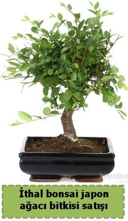 İthal bonsai saksı çiçeği Japon ağacı satışı  Mersin uluslararası çiçek gönderme