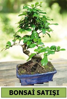 Çam bonsai japon ağacı satışı  Mersin çiçek servisi , çiçekçi adresleri