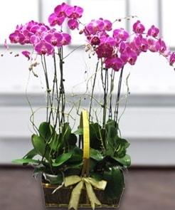 7 dallı mor lila orkide  Mersin 14 şubat sevgililer günü çiçek