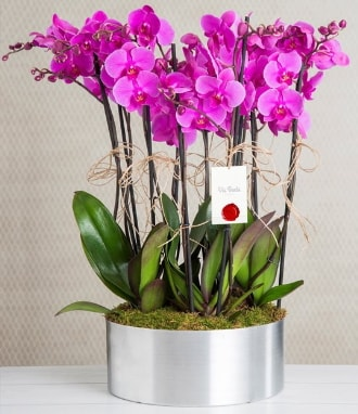 11 dallı mor orkide metal vazoda  Mersin 14 şubat sevgililer günü çiçek