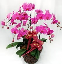 Sepet içerisinde 5 dallı lila orkide  Mersin kaliteli taze ve ucuz çiçekler