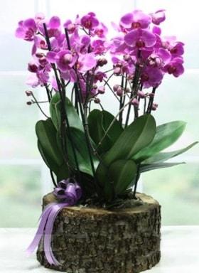 Kütük içerisinde 6 dallı mor orkide  Mersin kaliteli taze ve ucuz çiçekler